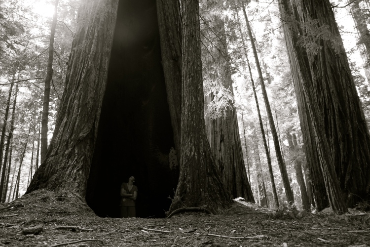 Redwoods Monastery